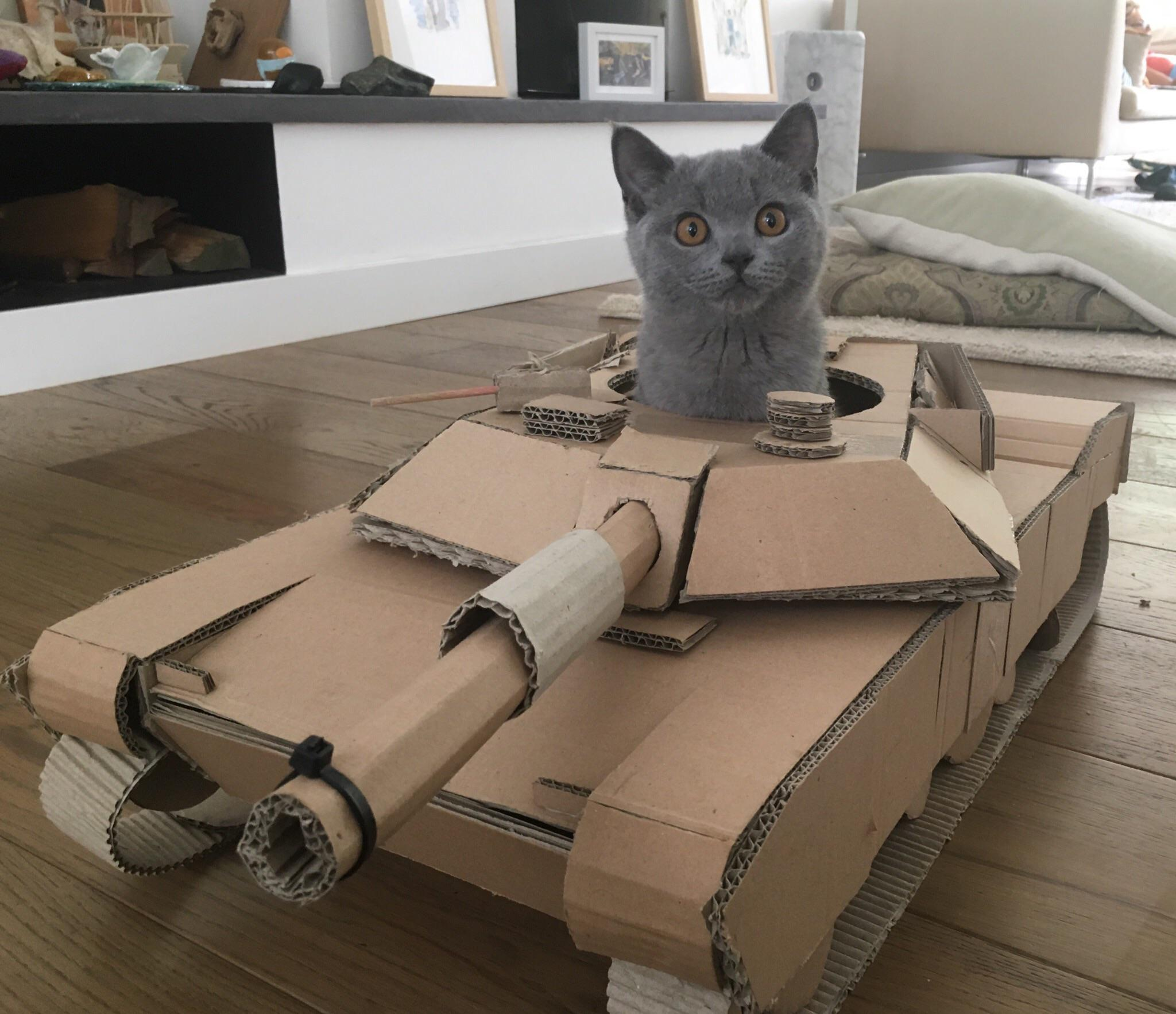 cat in cardboard M1 Abrams tank